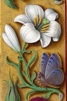 Horae ad usum Romanum, dites Grandes Heures d'Anne de Bretagne Author : Bourdichon, Jean (1457 ?-1521). Collage Illustration, Floral Illustrations, Botanical Illustration, Medieval Manuscript, Medieval Art, Vintage Botanical Prints, Botanical Art, Illuminated Letters, Illuminated Manuscript