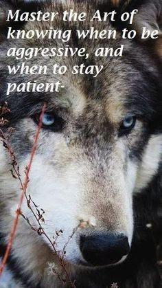Rumours, deception and quail dog training determine your pursuits in what you would love in a dog and make the wise choice. Wisdom Quotes, True Quotes, Great Quotes, Motivational Quotes, Inspirational Quotes, Quotes Quotes, Lone Wolf Quotes, Wolf Qoutes, Timberwolf