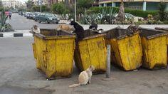 Dumpster Divers http://ift.tt/2rJQ2sZ