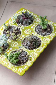 Eunice's Clean and Well-Lit Place tiny succulents in a repurposed Anthropologie ceramic muffin pan Succulent Gardening, Cacti And Succulents, Container Gardening, Succulent Planters, Succulent Cupcakes, Succulent Ideas, Succulent Containers, Succulent Arrangements, Diy Planters