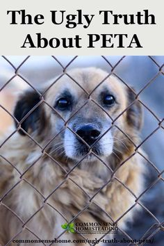 The Ugly Truth About PETA - promoting terror campaigns and killing animals - even going so far as to steal family pets out of people's homes.