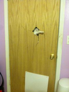 猫   Heeeeeere's kitty!