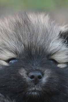 Good afternoon, furry little friend