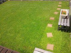 厚みのある葉っぱがフッカフカの絨毯を作り出します。 #スーパーイワダレソウ #クラピア #kurapia