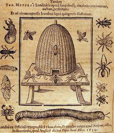 Thomas Moffett. Insectorum 1634 #beekeeping