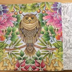 Image result for secret garden johanna basford inspiration for coloring owl