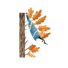 White-breasted Nuthatch print