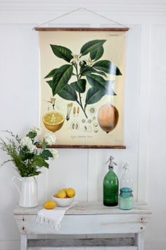 DIY vintage botanical chart | Inexpensive DIY wall art | Apartment therapy