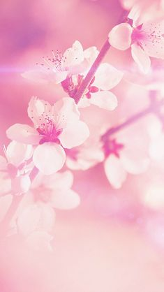 Flower Pink Cherry Blossom Flare Nature #Phone #5s #wallpaper