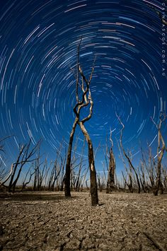 Startrails captured over a forest of dead trees which lined the edge of a dried up lake. Country Victoria, Australia. Photo stack of 113 exposures @ 25sec each. # NEX-5N#