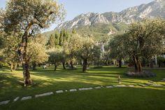 Park of the olive trees in Villa Feltrinelli. #lake #garda #grandhotel #villafeltrinelli #garden #trees #olive #green #nature