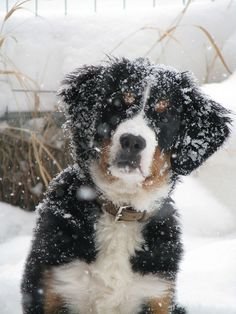This is my puppy Breckee, she loves the snow and she didn't want to come in!