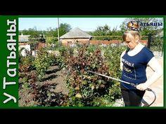НАШАТЫРНЫЙ СПИРТ от ТЛИ на розах, плодовых деревьях, кустарниках и других растениях! - YouTube