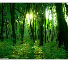 The DeeZ 5Cs Award Banner. ♥ ♥ ♥ ♥ series . Shades of green.Poland. by Brown Sugar. Tribute to Fryderyk Chopin . Views: 7343.  Featured in Glitter, Sparkle & Shine. by © Andrzej Goszcz,M.D. Ph.D