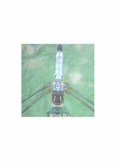 Mens Cotton Pocket Square - Lily by VIDA VIDA zDe4QU