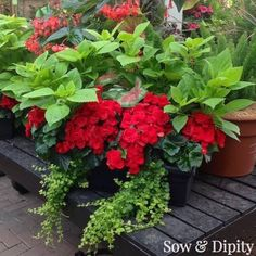 Hanging Baskets For Shade -