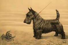 Scottish Terrier and crab by Léon Danchin (1887-1939)