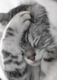 31 Cute Cat Pictures — Adorable Kitten Cats are naturally mischievous animals and very adorable creatures. If you own a cat, you will have a cuddle buddy Pretty Cats, Beautiful Cats, Animals Beautiful, Simply Beautiful, Baby Animals, Funny Animals, Cute Animals, Animal Memes, Wild Animals