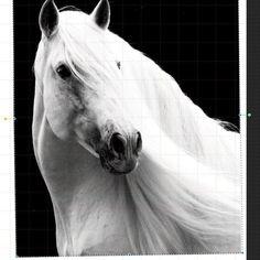 Watercolor Art Diy, Horses, Animals, Animales, Animaux, Animal, Animais, Horse