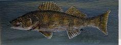 Fish Wall Art, Fish Art, Acrylic Paint On Wood, Painting On Wood, Lake Erie Fishing, Fish Paintings, Duck Art, Cedar Boards, Wood Fish