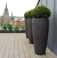 olivier plantes que j 39 aime pinterest centenaire. Black Bedroom Furniture Sets. Home Design Ideas