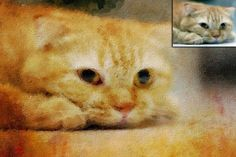 Handmade oilpainting from your photo - a custom portrait of a cat