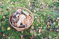 It's fair to say that Latvian cuisine has yet to set the culinary world alight. But if you're planning a visit to Latvia and wondering what on earth to expect, here's a novice's guide to the local food and drink.