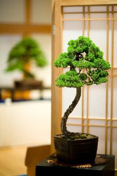 schöne dekoideen mini bonsai baum pflanzen