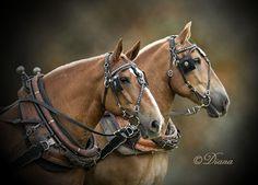 Equine Photographers Network