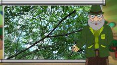 Erdő Ernő bácsi meséi - Melyik fafajból él a legtöbb?