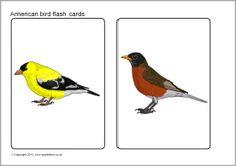 American birds picture flash cards (SB9677) - SparkleBox