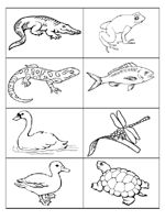 Pond Life Coloring Page Pond life Worksheets and Kindergarten