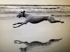 Interesting dog fact of the week: Greyhounds can run at speeds of up to 45 mph and are the fastest dogs on the planet.