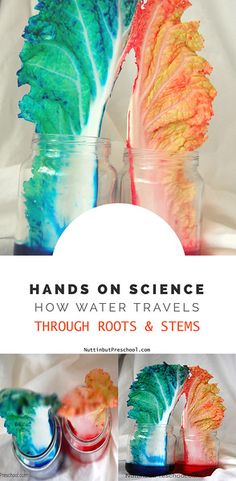 Science How Water Travels Through Roots | Nuttin' But Preschool
