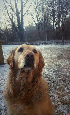 My sweet❤ #golden #retriever #dog #love #her