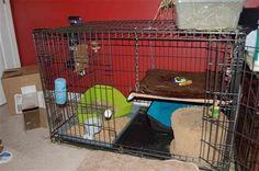 Bi-level condo from dog crate - BinkyBunny.com - House Rabbit Information Forum - BinkyBunny.com - BINKYBUNNY FORUMS - HABITATS AND TOYS
