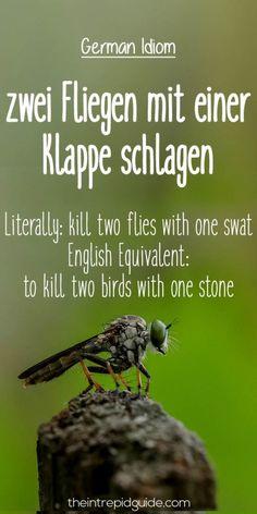 German Idioms zwei Fliegen mit einer Klappe schlagen