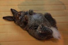 Sleeping bunny 6 awwwwwwwwwww!