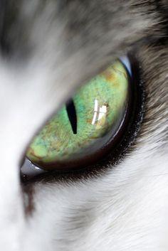 Reflejo en ojos verdes