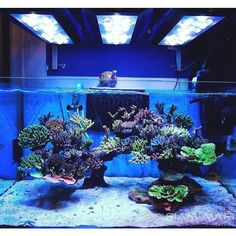 Saltwater Aquarium - Find incredible deals on Saltwater Aquarium and Saltwater Aquarium accessories. Let us show you how to save money on Saltwater Aquarium NOW! Saltwater Aquarium Setup, Coral Reef Aquarium, Saltwater Fish Tanks, Aquarium Design, Marine Aquarium, Live Aquarium, Marine Fish Tanks, Marine Tank, Nano Reef Tank