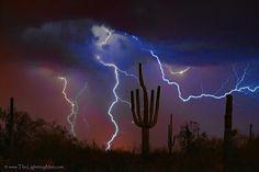 Saguaro Lightning Storm