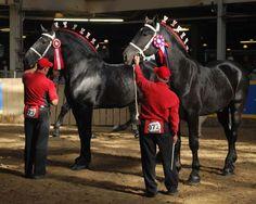 Ontario Percheron Horse Assoc. a great group!
