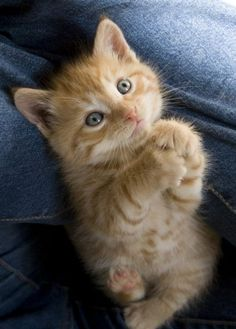 A Kitten's Prayer - LOLcats is the best place to find and submit funny cat memes and other silly cat materials to share with the world. We find the funny cats that make you LOL so that you don't have to. Funny Kittens, Cute Cats And Kittens, Kittens Cutest, Ragdoll Kittens, Kitty Cats, Baby Kitty, Cute Baby Animals, Funny Animals, Funny Horses
