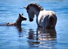 YOU WERE RIGHT MOM.....THIS IS REALLY COOL!!   #horses