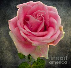 Title  Dirty #Rose  Artist  Terry Weaver  Medium  Photograph - Photo/digital Art