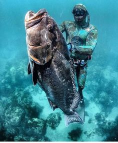 Spearfishing Gear, Surf, Skin Diver, Monster Fishing, Fly Fishing, Spear Fishing, Ocean Activities, Under The Ocean, Fishing Pictures