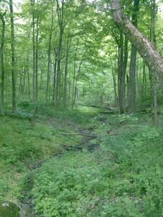 Hueston Woods State Park in College Corner, OH