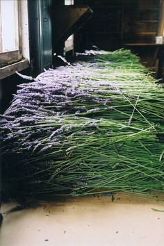 dustjacketattic: by marilyn frances, I won/t have this much lavender when I harvest mine, but it will be a lot and I will have a few ideas of what to do with it. I love my lavender ! Lavender Blue, Lavender Fields, Lavander, Drying Lavender, Lavender Garden, French Lavender, Lavender Flowers, Color Lavanda, Hue Color