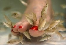fish for pedicures