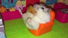 Hamster sitzt auf kleinem Sessel und isst Apfelkuchen - http://www.dravenstales.ch/hamster-sitzt-auf-kleinem-sessel-und-isst-apfelkuchen/